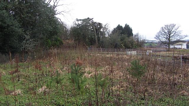 Young woodland, Edmonstone