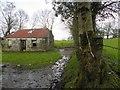 H5259 : Ruined cottage, Dunbiggan by Kenneth  Allen