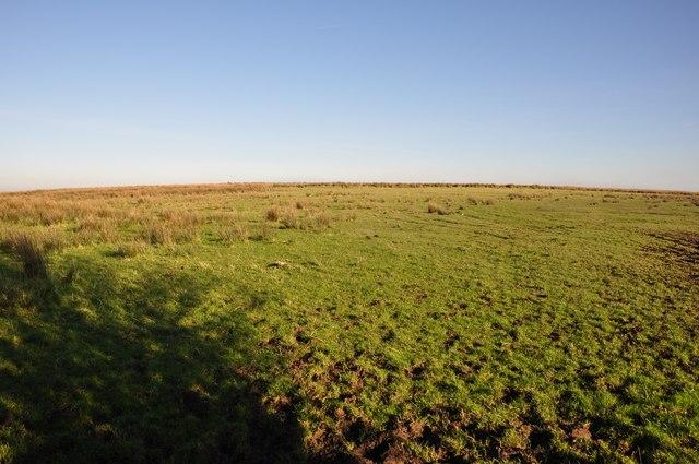 Exmoor : Grassy Moorland