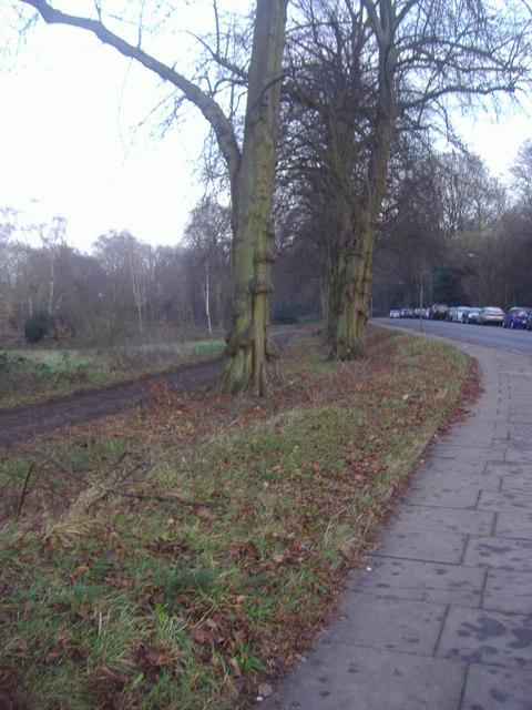 Trees on the Heath Extension, Wildwood Road