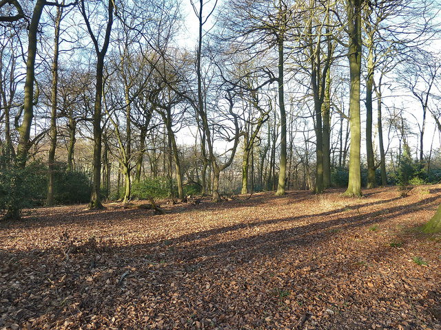 Trees and leaves in Pavis Wood