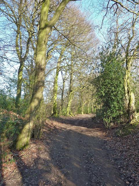 Ridgeway through the trees of Pavis Wood