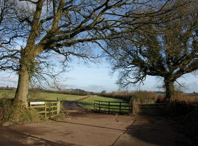 Farm road to Little Beare Farm