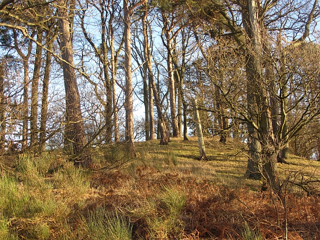 Harlaw Wood