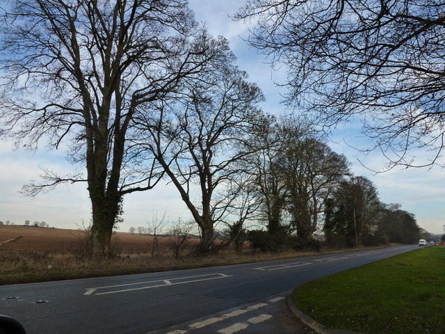 Trees near The Patch east of Hillington, Norfolk