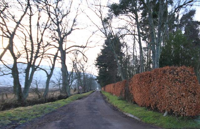 Forgandenny Road