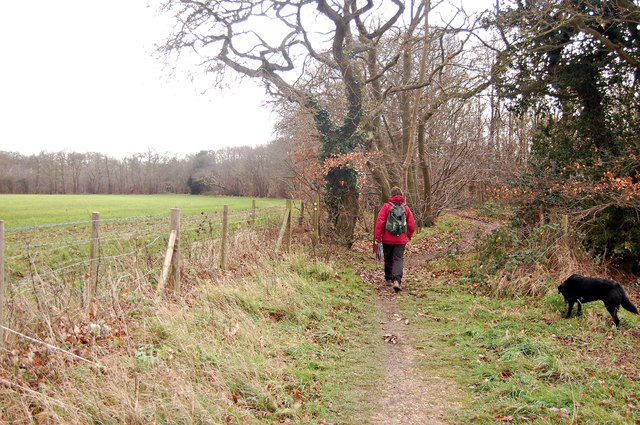 Footpath approaching Thrift Wood