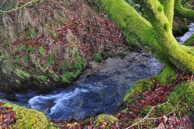 Exmoor : Tangs Bottom Stream