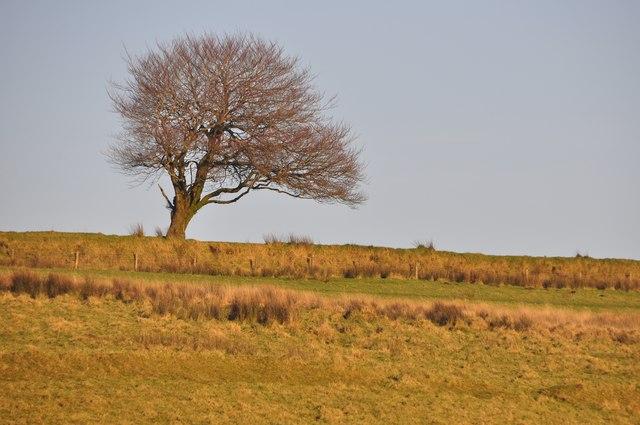 Exmoor : Tree on Exmoor
