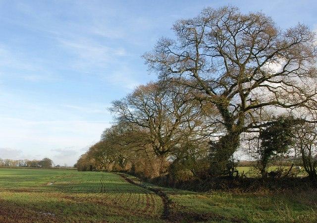 Trees, Ashridge Moor