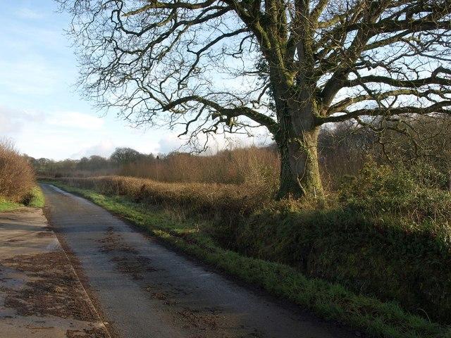 Lane near Hill Barton