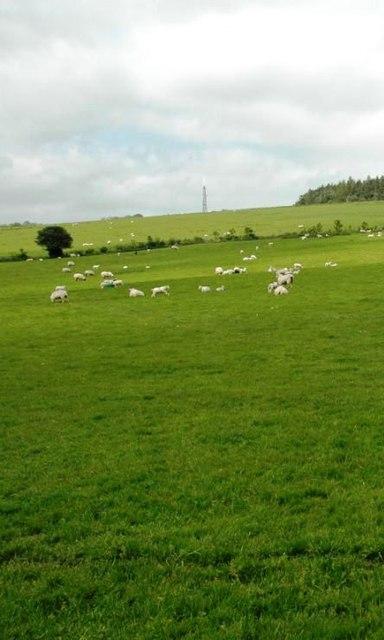 Sheep Pasture near Haltwistle