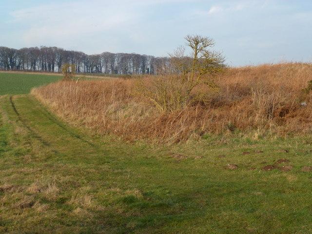 Bridleway over Grimston Heath, Norfolk