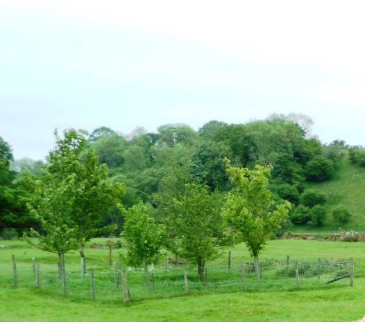 Fenced Tree Planting by The River South Tyne