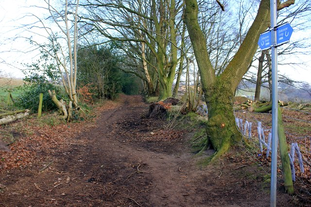 Path on the Delamere Loop