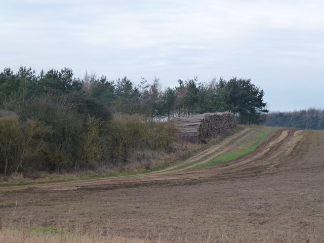 Timber harvest on Massingham Heath