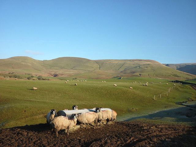 Sheep feeder above Acorn Sike