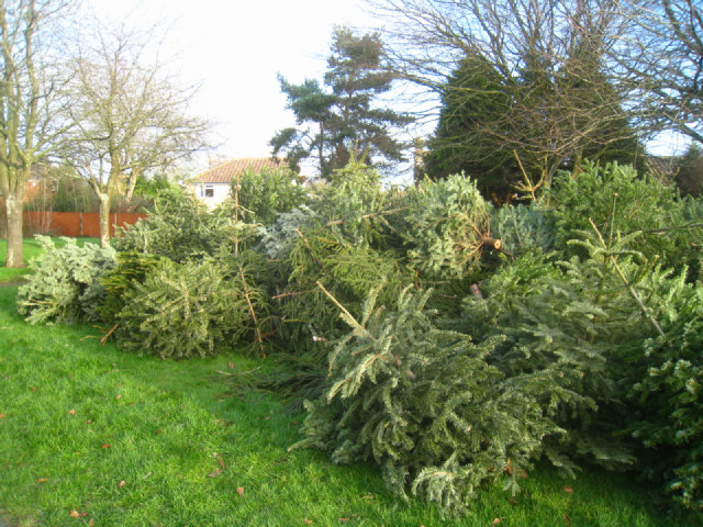 Christmas tree collection point