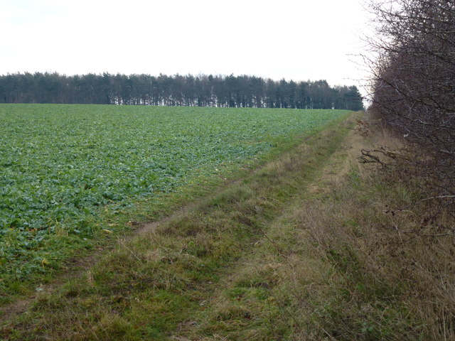 Track to Tinkers' Belt on Massingham Heath