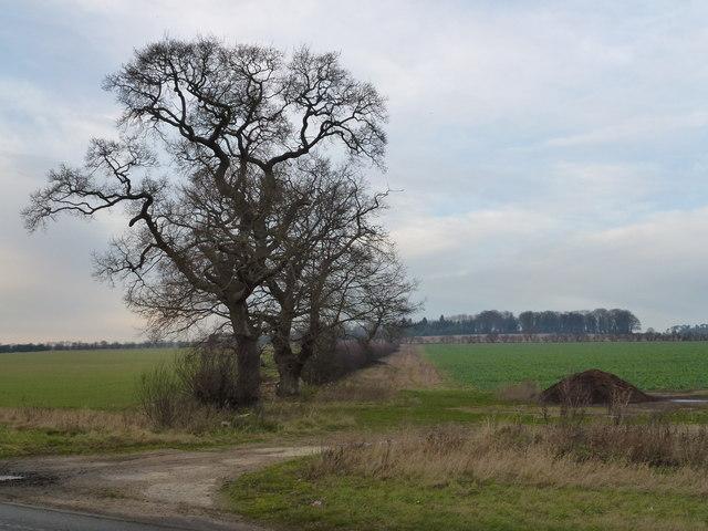 Norfolk countryside east of Gayton