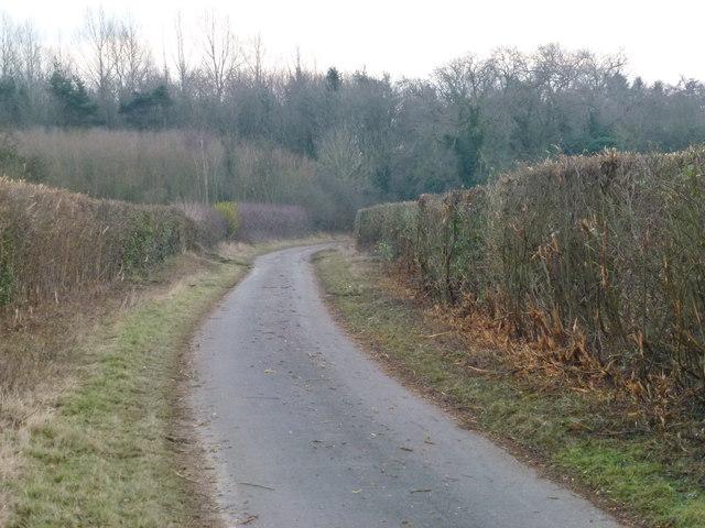 Country lane to Gayton Thorpe, Norfolk