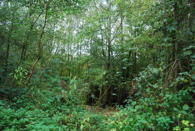 Woodland in the Blackwater Valley