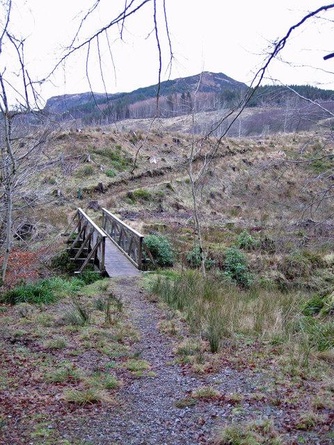 Footbridge in Lochalsh Woodland Park