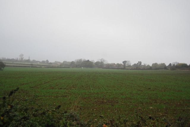 Winter wheat, Ridgeway Farm