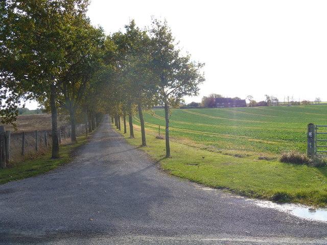 The driveway to Drybank Farm