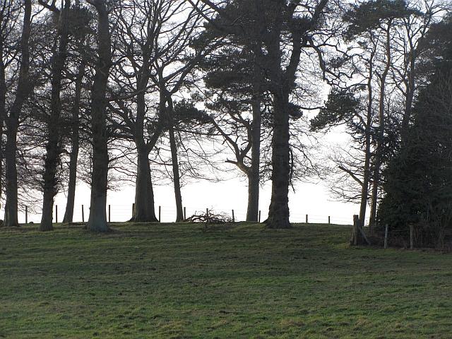 Woodland, Lurdenlaw