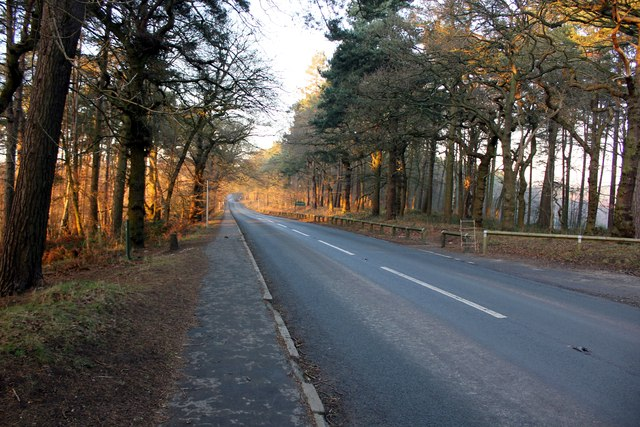 The B5152 at Delamere Forest