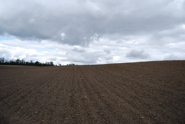 Looking along the plough furrows