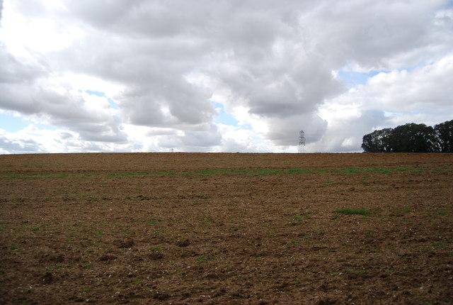 Farmland near Elm Pollard