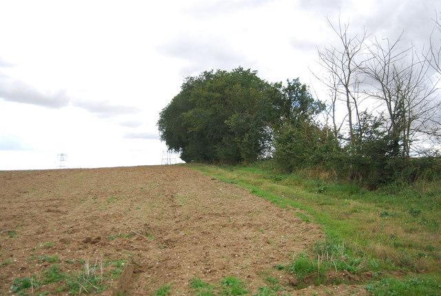 Hedgeline near Akenham