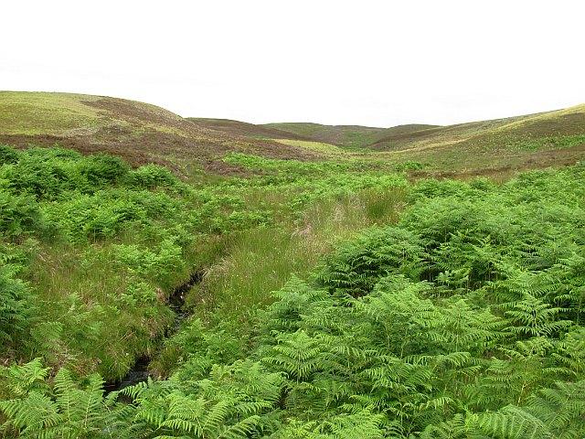 Bracken covered moorland