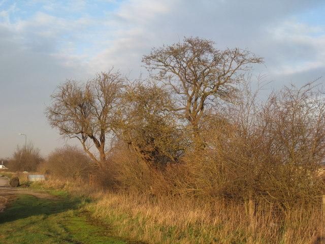 Trees at Tudworth