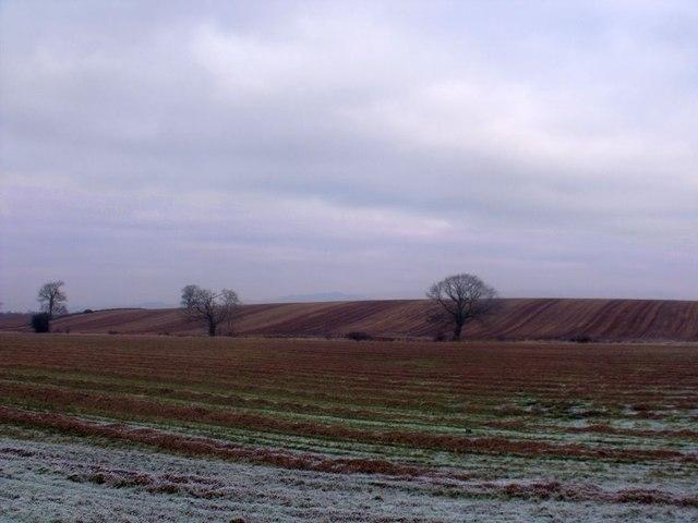 West Plean .fields
