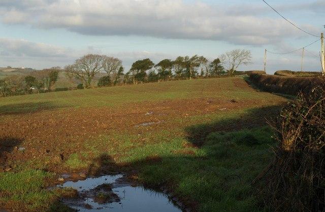 Field near Coulson