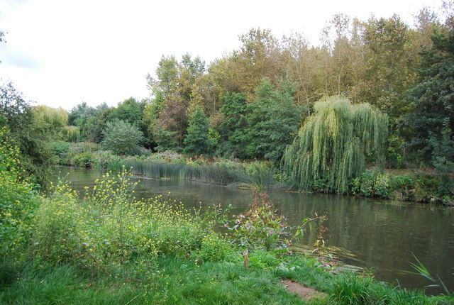 Weeping Willow by the River Medway