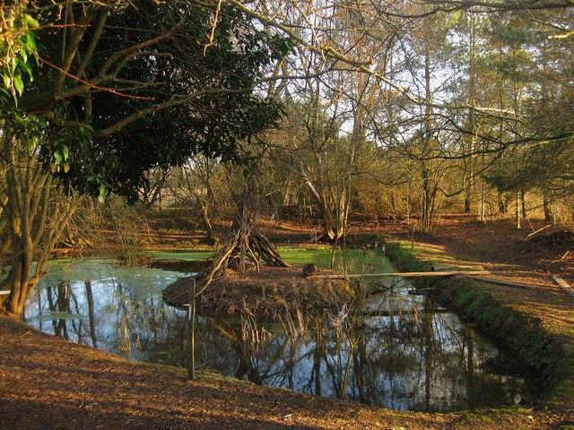 Pond, Brickfield's Farm