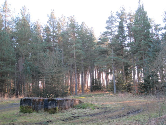 Clearing in Slaley Forest