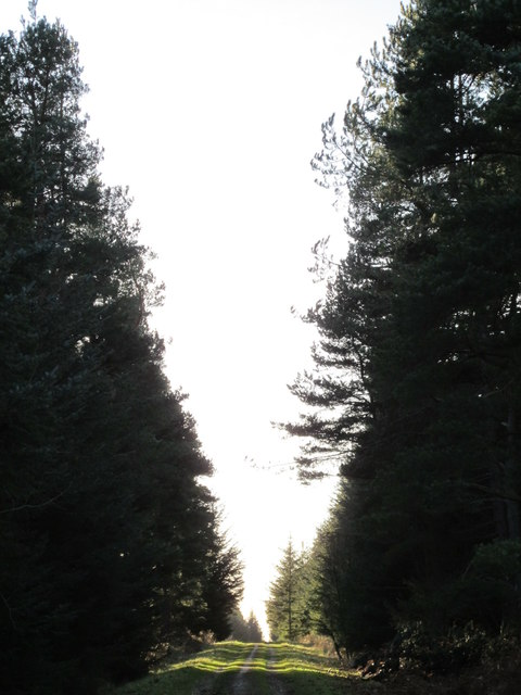 Track in Slaley Forest