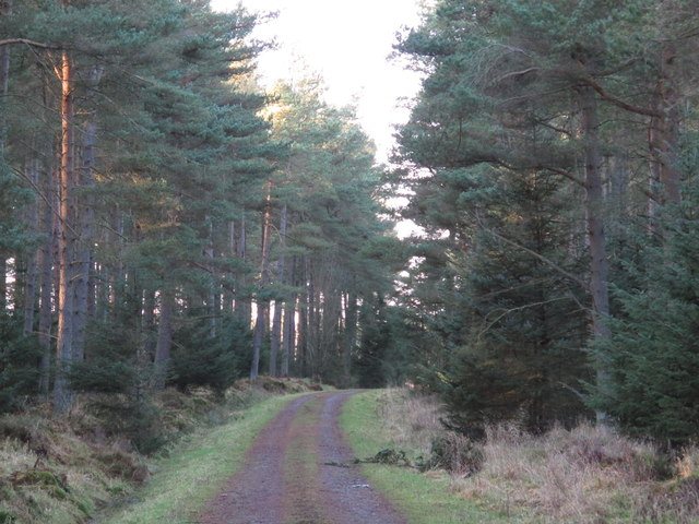 Track in Slaley Forest on Coalpits Fell