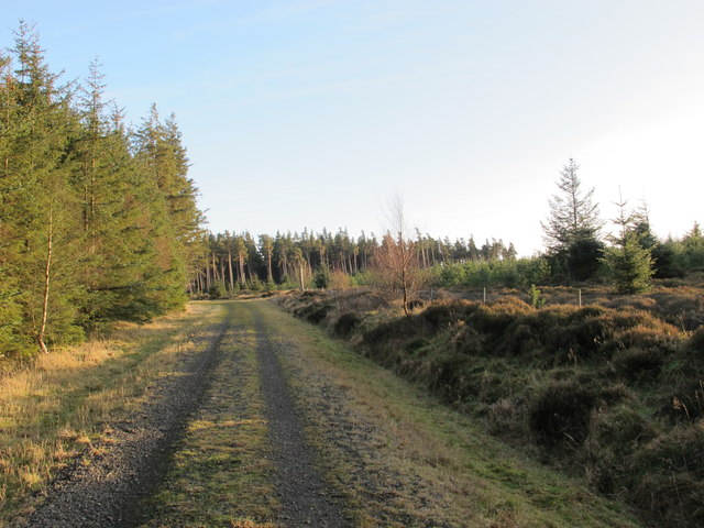 Track in Slaley Forest (3)