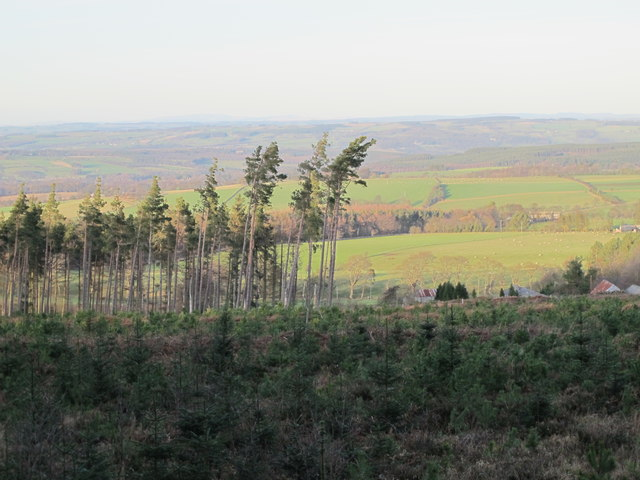 Cleared area in Slaley Forest above Spring House