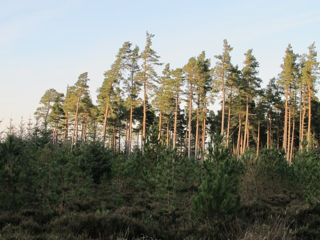 Small cleared area in Slaley Forest (2)
