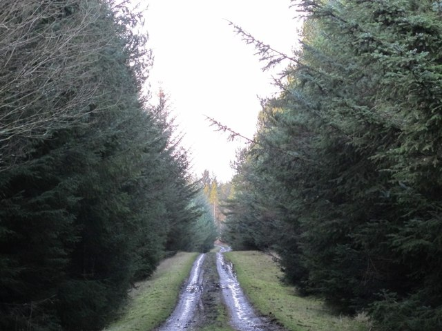 Track in Slaley Forest (2)
