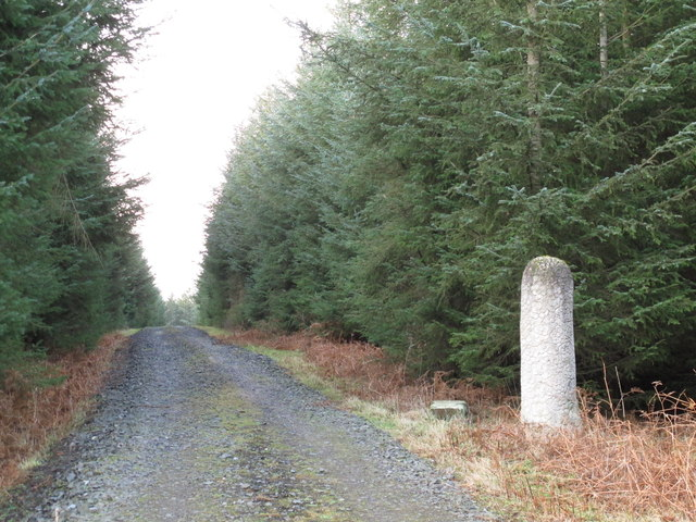 Track and wood sculpture in Slaley Forest