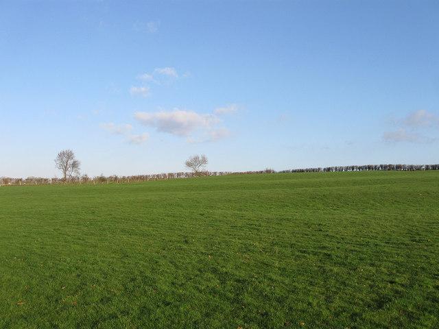 North Field (2)