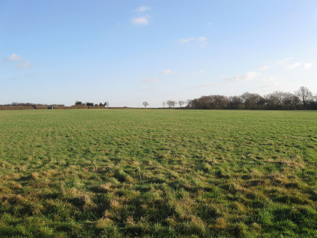 Triangular Field